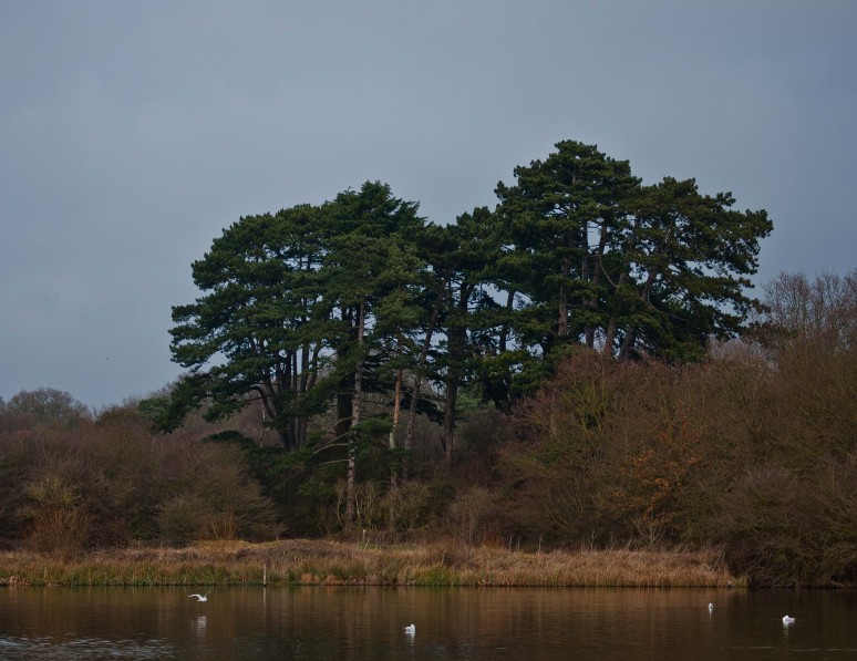 Hatfield Forest, Essex