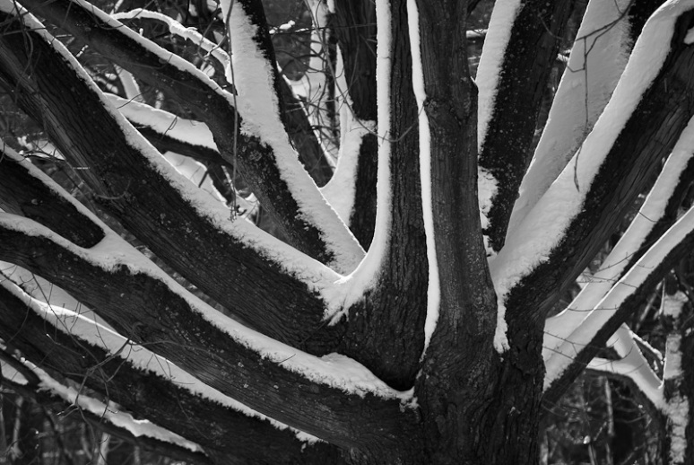 Abstract Trees under snow