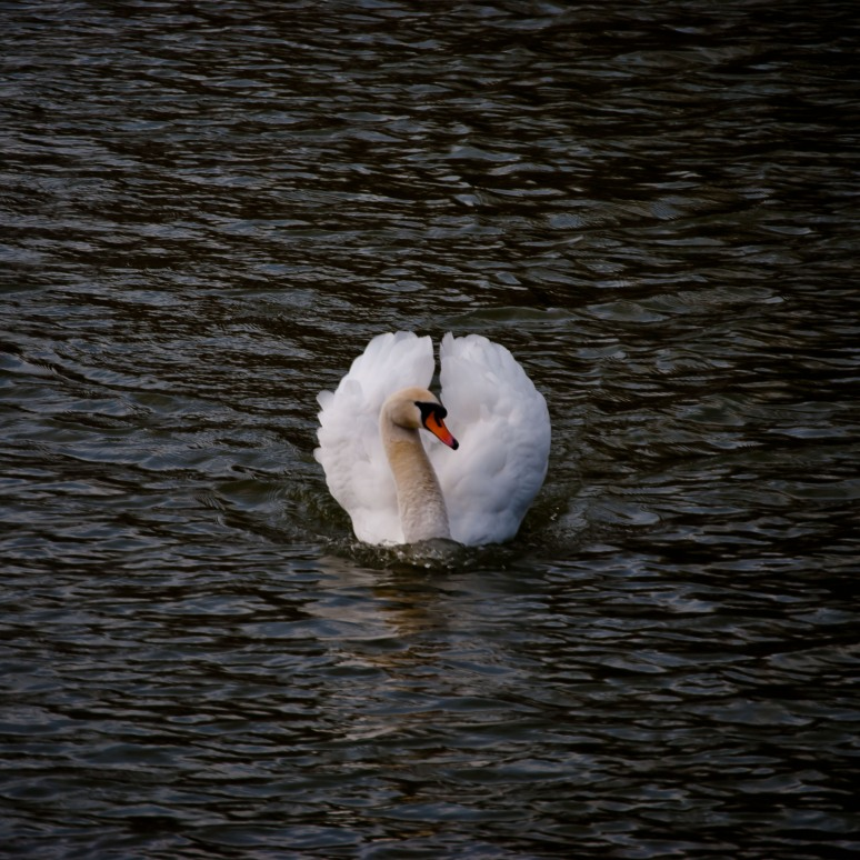 Swan Foxton Locks