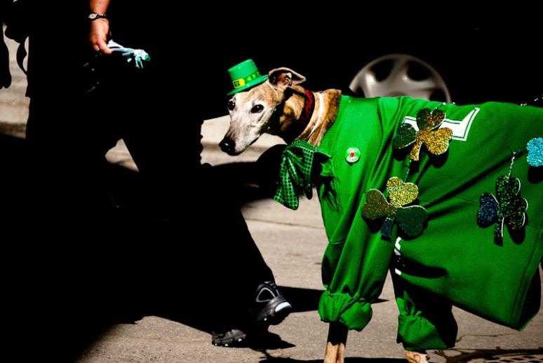 Dog in green