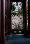 Blossom near the Friendship Hall
