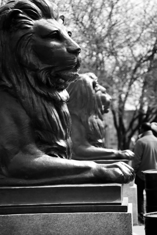 Lion statues at the George Étienne Cartier monument