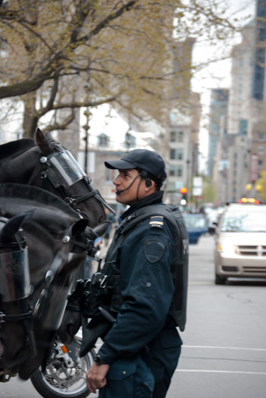Police cavalry getting some attention