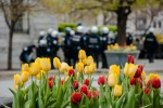 Tulips and police