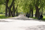 Tree lined paths at Parc Jeanne Mance