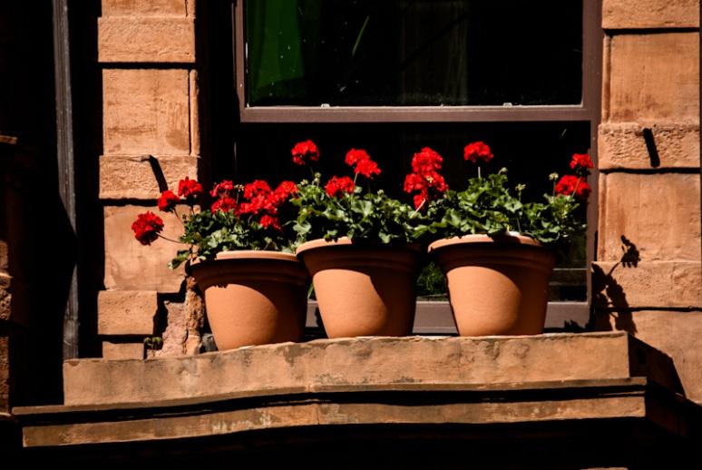Window flower display on rue Jeanne Mance