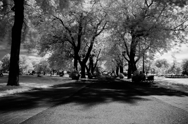 Parc Jeanne-Mance Infrared