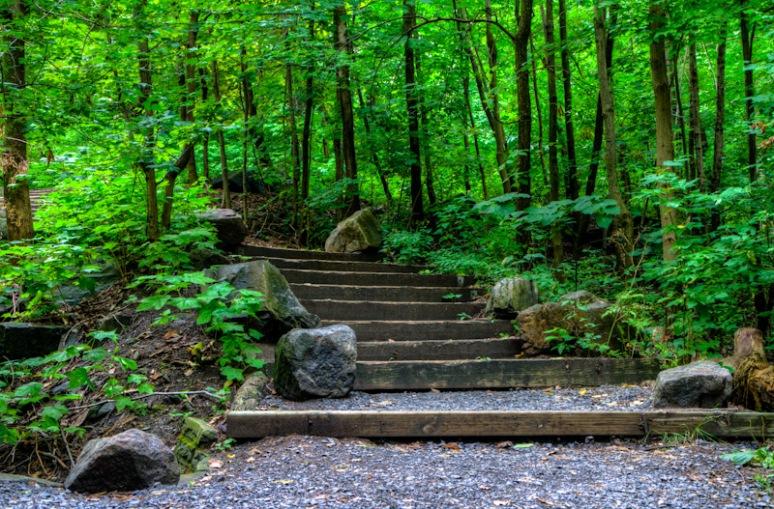 Steps on Mount Royal adjacent to the Royal Victoria Hospital