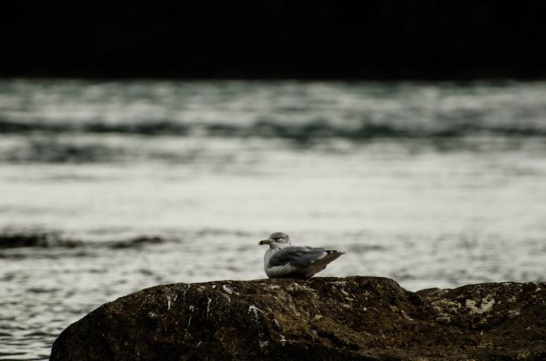 A bird on a rock