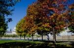 Autumn jogger at Basin Bonsecours