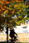Autumn cyclist at Basin Bonsecours