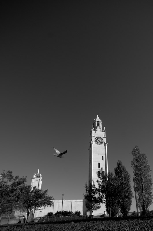 Bird in flight at the Clock tower