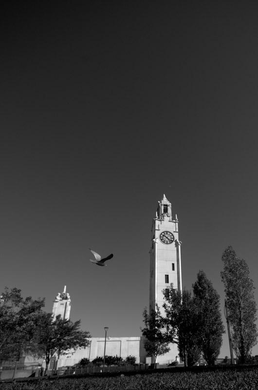Bird in flight at the Clock tower
