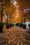 Autumn colours in Place de la Dauversière