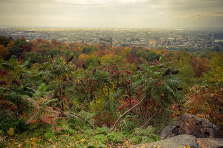 view toward East Montreal