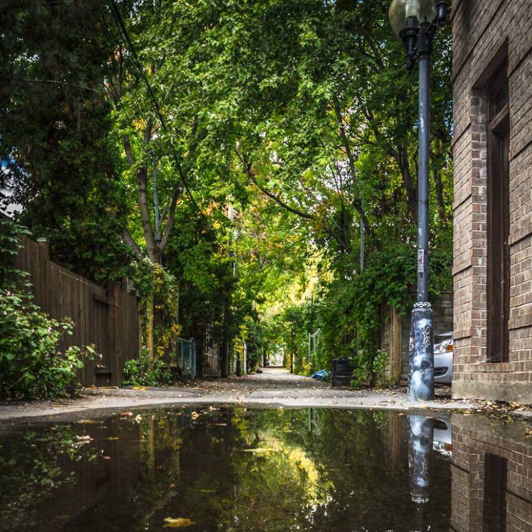 Back alley reflections on Le Plateau