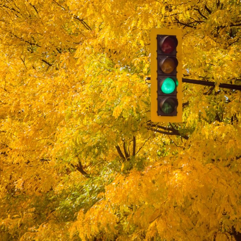 Autumn traffic light on rue Rachel