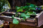 An organ plant pot