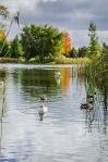 Jarry Park Lake