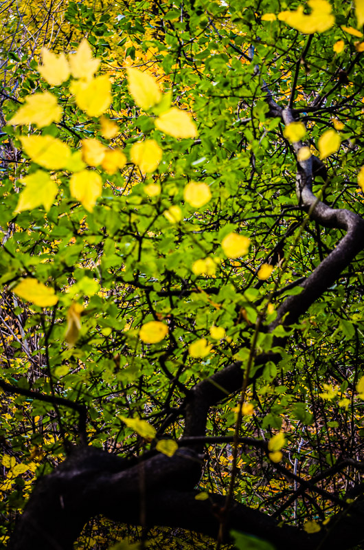 Green turns to yellow
