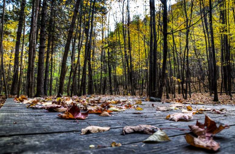 Leafy boardwalk