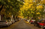 Autumn street on Le Plateau