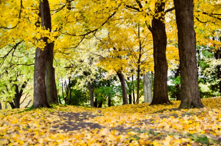 The Yellow leaf path