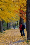 Mount Royal in Autumn
