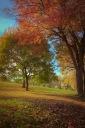 Last days of Autumn on Parc Jeanne-Mance
