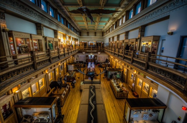 Interior of McGill's Redpath Museum