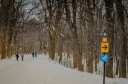 Boxing day on Mount Royal